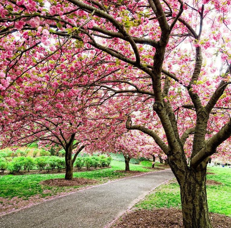 Brooklyn Botanic Garden, New York