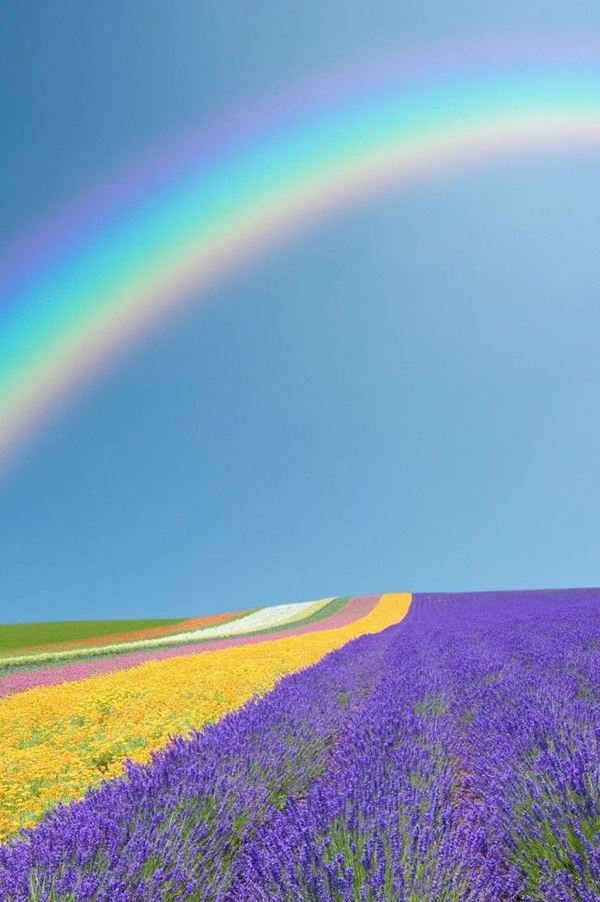 Rainbow Above The Colorful Flower Field