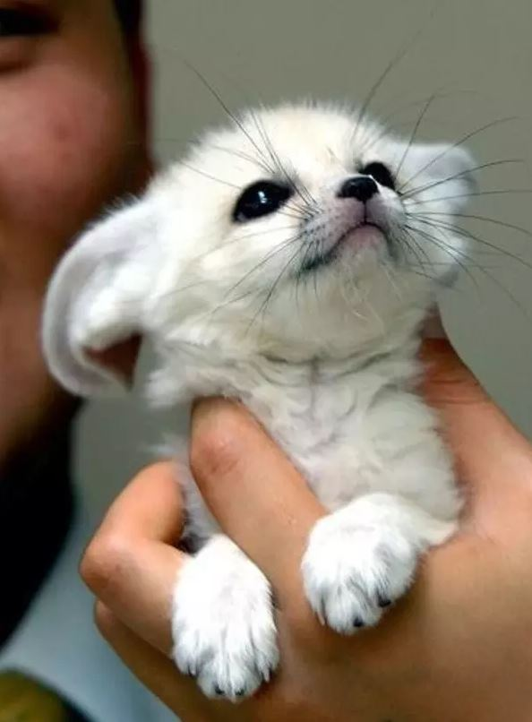 21 Absolutely Cute Animals