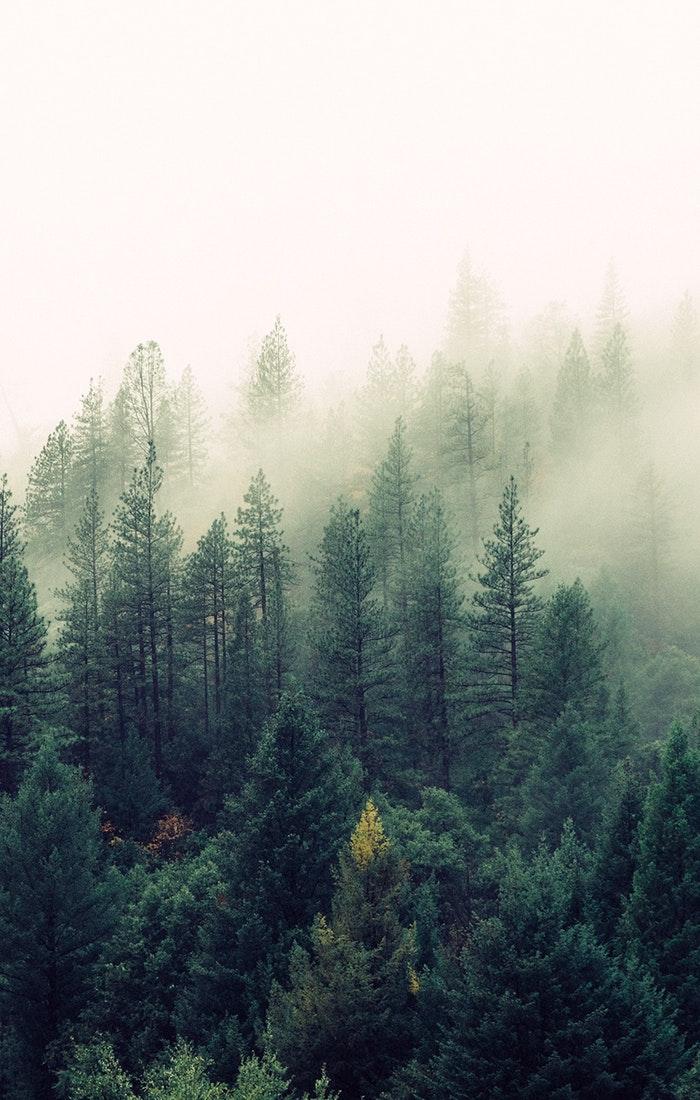 Fogy Trees