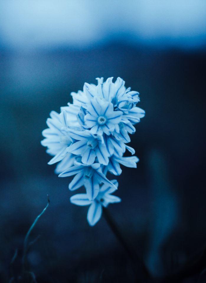 Random Inspiration | Blue