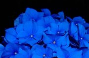 Random Inspiration | Blue | 37 Pics