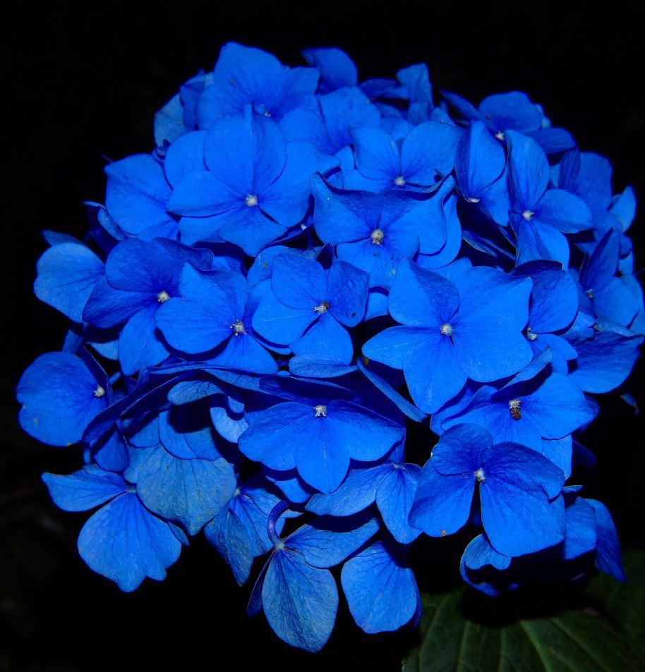 Random Inspiration Blue 37 Pics