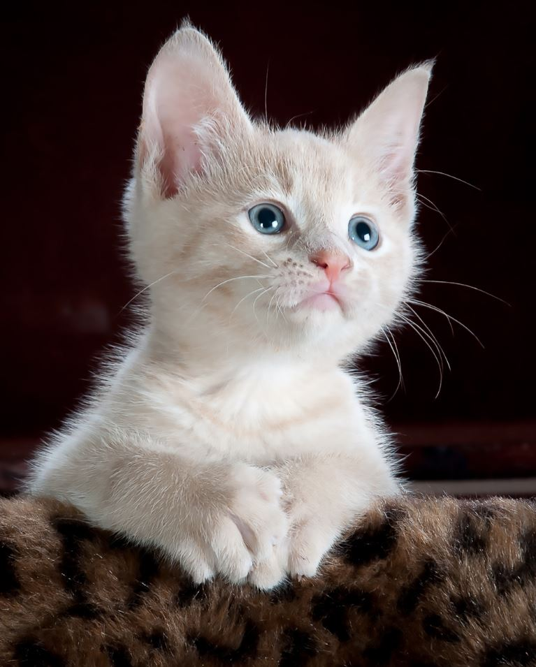34 Adorable Cats and Kittens