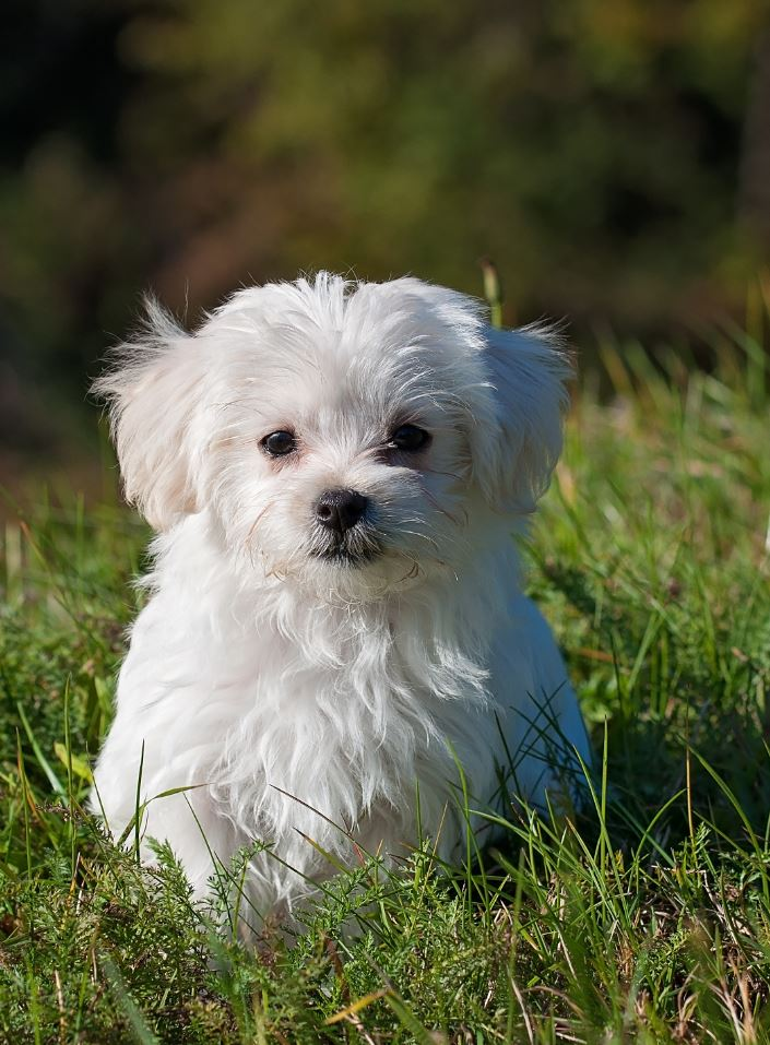 Cute, White Dog