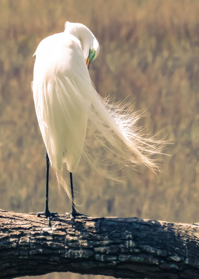 White Feathered Bird