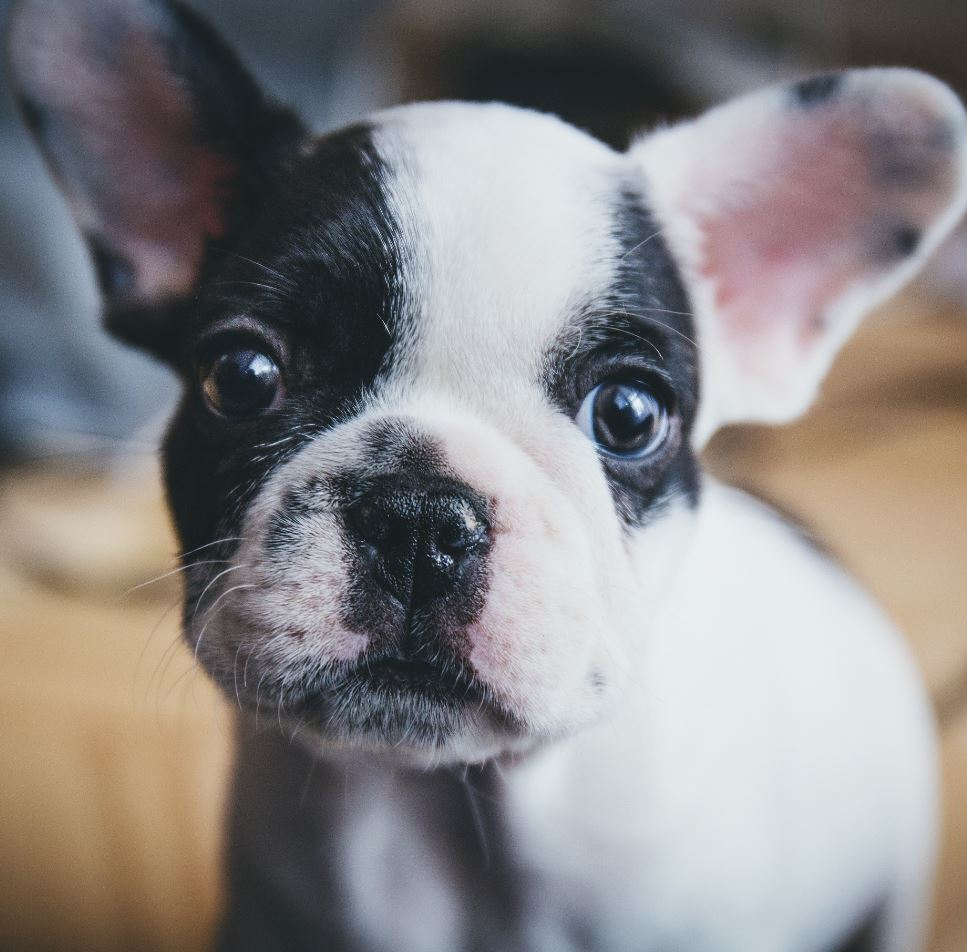 The 42 Most Adorable Puppies of All Time