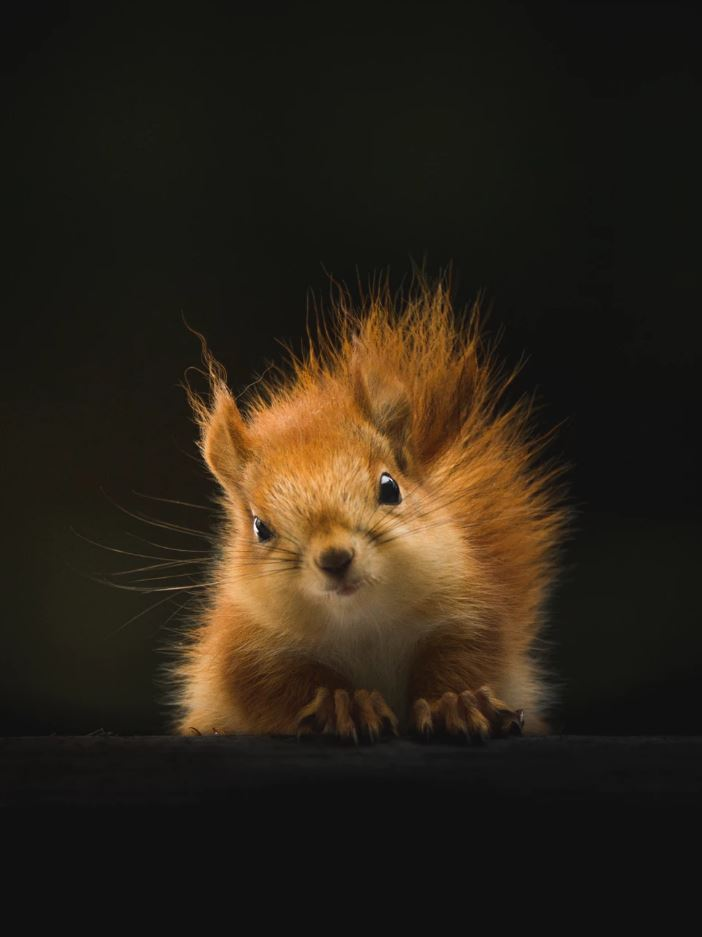 26 Of The Cutest Animals In The World